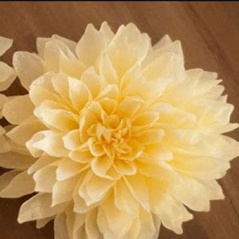 Gyönyörű papír dáliák krepp papírból - tavaszi dekoráció