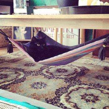 Asztal alá rögzíthető varázsszőnyeg macskaágy házilag