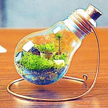 DIY Eternal terrarium from a light bulb - recycling craft