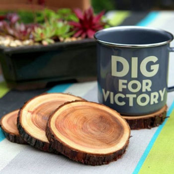 DIY Natural branch coasters - nature craft