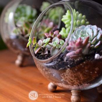 Mini lábakon álló gömb üvegház házilag pozsgásokkal
