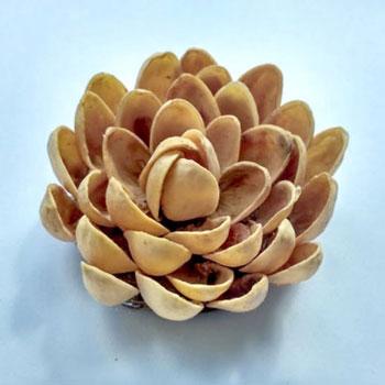 Pisztácia héj virágok egyszerűen - kreatív újrahasznosítás