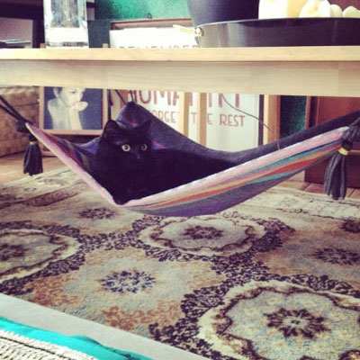 DIY magic carpet cat hammock from a towel