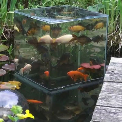 How to build a fish tower ( DIY observation tower) for fish pond