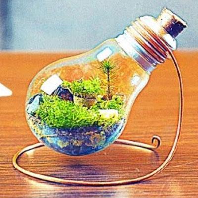 DIY Eternal terrarium from a light bulb - recycling craft