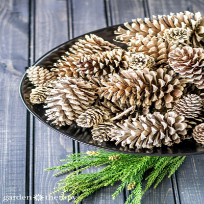 How to make beached pinecones