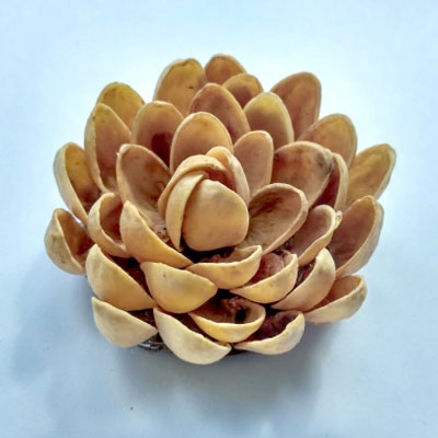 Easy DIY pistachio flower (pista shell flower) - frugal home decor