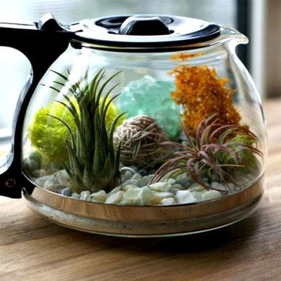 DIY coffee pot terrarium with succulents