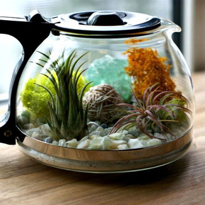DIY coffee pot terrarium with succulents
